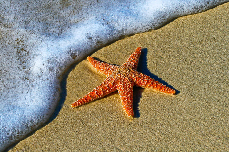 Does Starfish Have a Brain