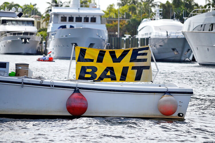 How to Fish With Live Shrimp? Live Bait on Boat!
