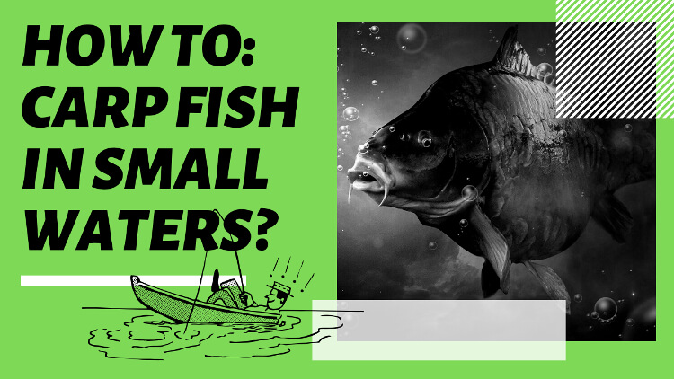 How to Carp Fishing in Small Waters