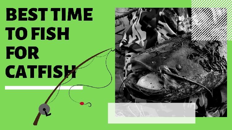 What is the Best Time to Fish for Catfish